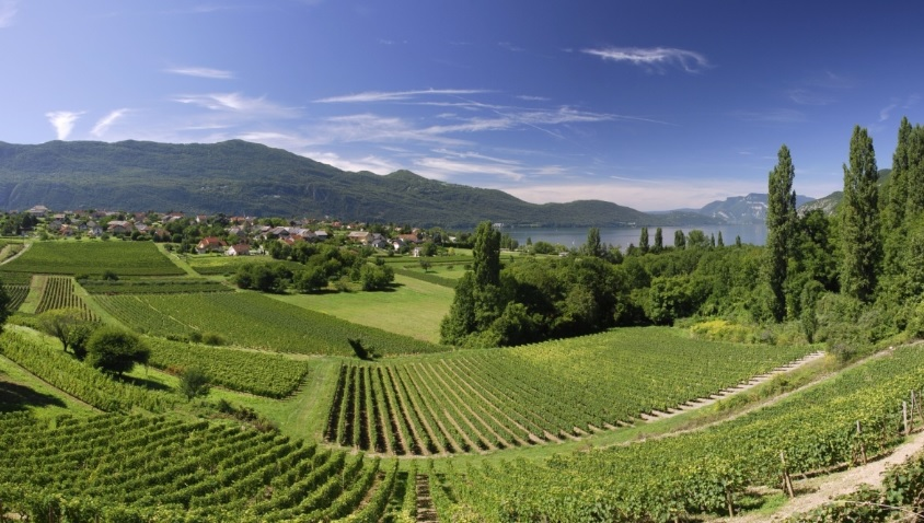 Все, что вам надо знать о покупке виноградника во Франции